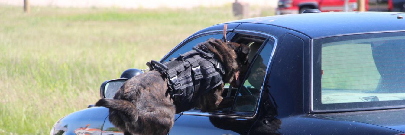 K-9 officer dog jumping into car window